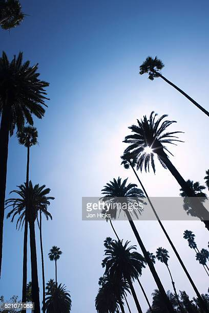 palm trees in beverly hills - beverly hills stock pictures, royalty-free photos & images