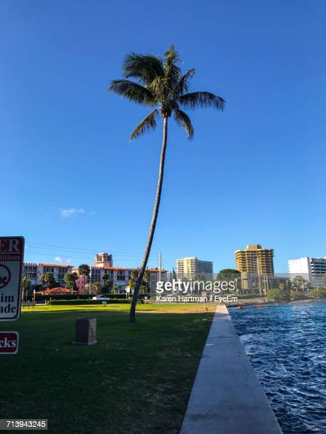 Palm Trees In City Against Blue Sky