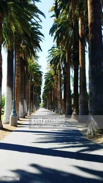 palm trees in city - evelyn martinez stock pictures, royalty-free photos & images