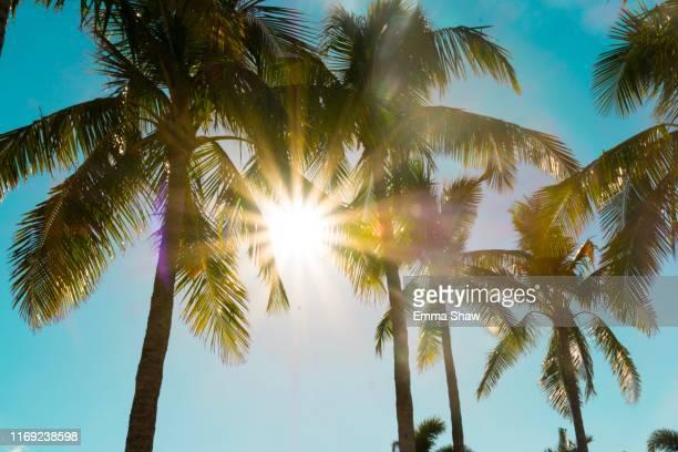palm trees in hamilton island - île d'hamilton photos et images de collection