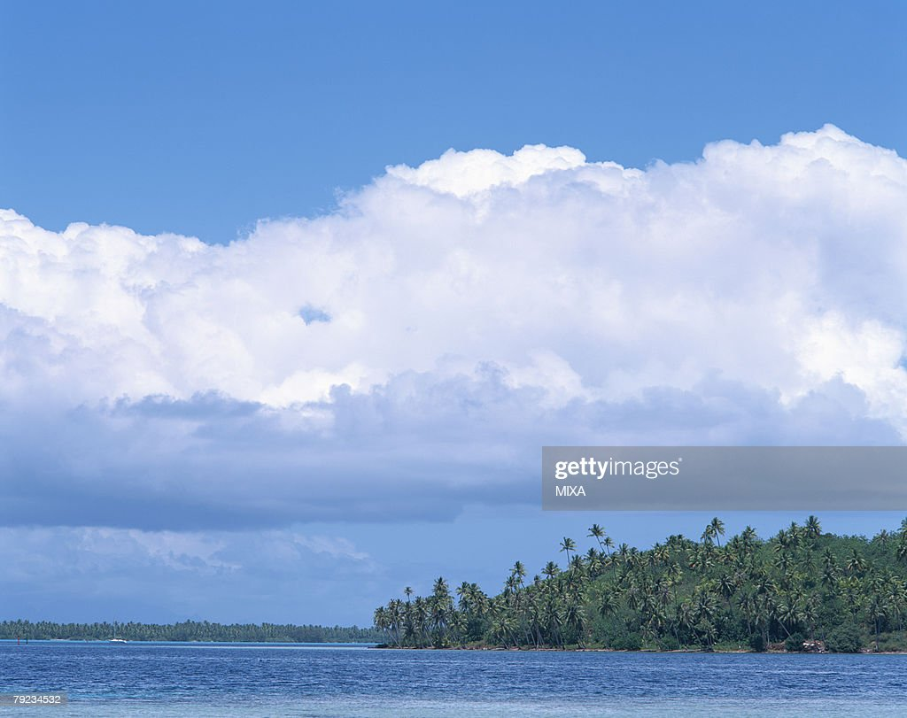 Palm trees in island : Stock Photo
