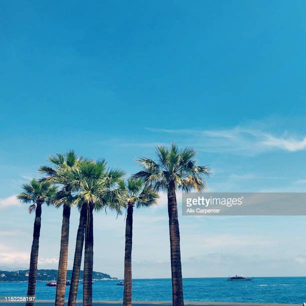 palm trees in monte carlo, monaco - monte carlo stock-fotos und bilder