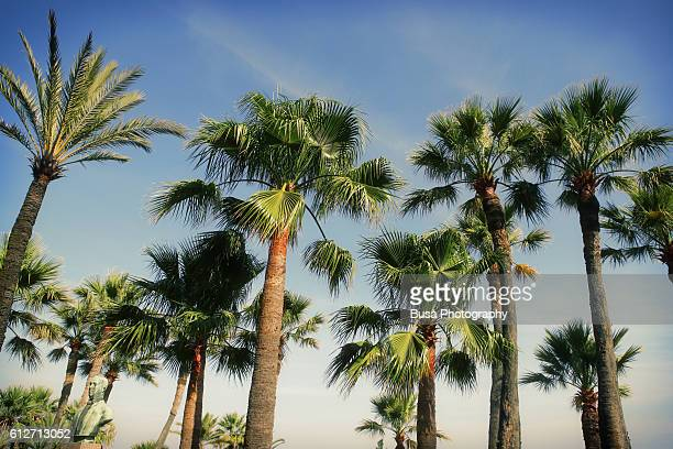 palm trees in montecarlo, french riviera, france - monte carlo stock pictures, royalty-free photos & images