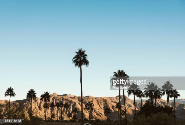 palm trees in palm springs, california, usa - palm springs stock-fotos und bilder