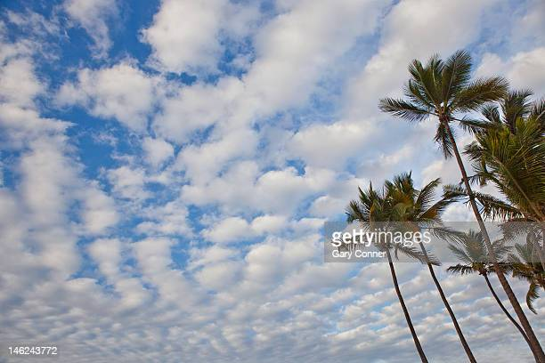 Palm trees in San Juan