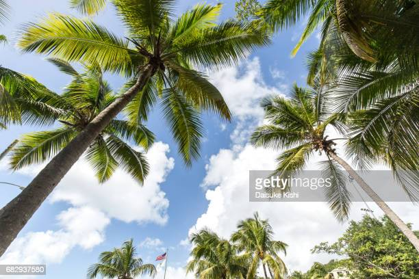 Palm Trees in St.John, US Virgin Islands