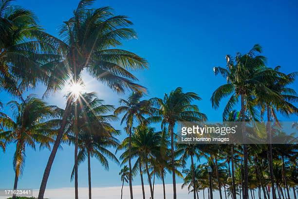 Palm trees in sunlight against blue sky