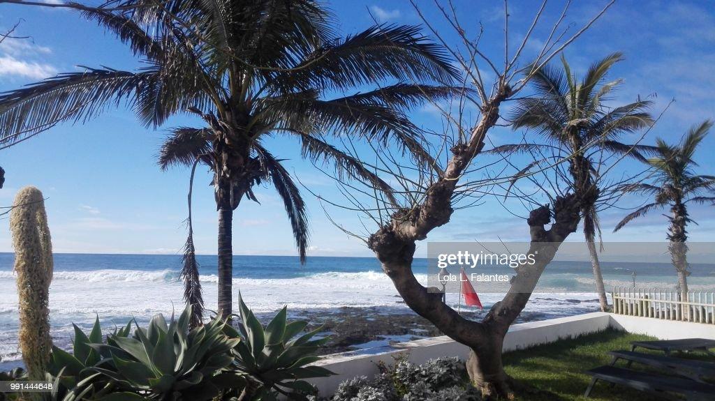 Palm trees in Tenerife nord coast : Foto de stock