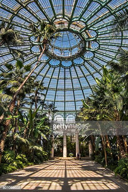 Palm trees in the Jardin d'hiver / Winter Garden at the Royal Greenhouses of Laeken in Art Nouveau style, designed by Alphonse Balat in the park of...