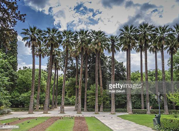 palm trees in the national garden in athens, greece - national landmark stock pictures, royalty-free photos & images