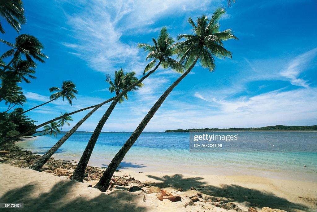Palm Trees Leaning Over The Beach Natadola Viti Levu Fiji