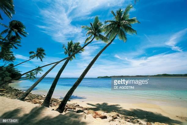 Palm trees leaning over the beach Natadola Beach Viti Levu Fiji