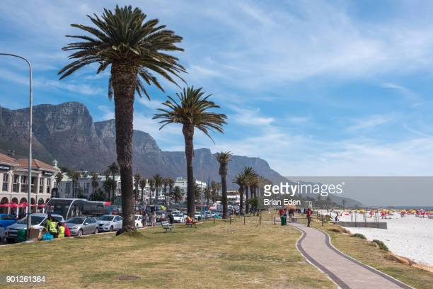 Palm trees line the beach in Camps Bay, South Africa