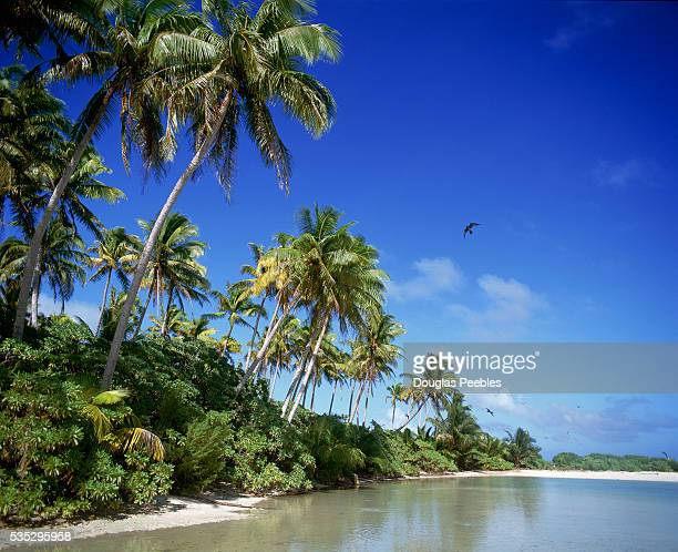 Palm trees line the beach on Tetiaroa an island in French Polynesia that is owned by American actor Marlon Brando