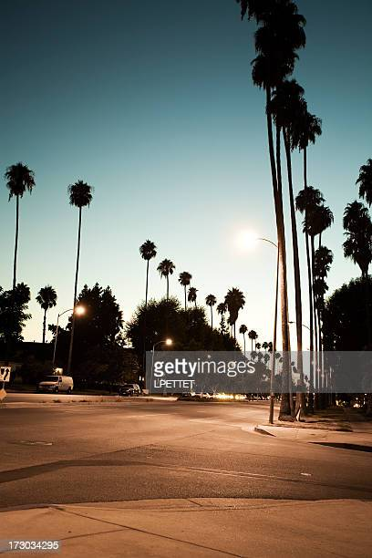 palm trees lining a los angeles street during the twilight - beverly hills california stock pictures, royalty-free photos & images