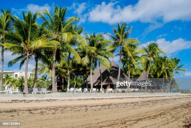 palm trees lining the beach - new caledonia stock photos and pictures