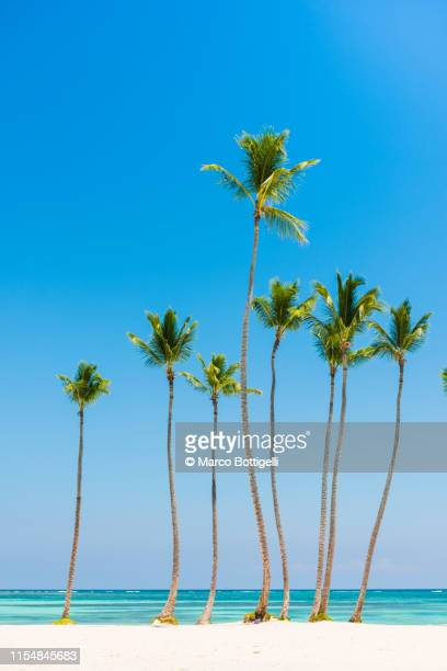 palm trees llined on an idyllic tropical beach in the caribbean - antilles stock pictures, royalty-free photos & images