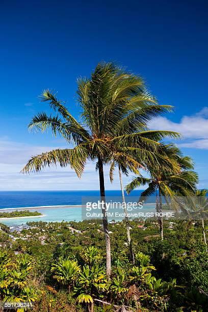 Palm trees, Muri Lagoon, Rarotonga, Cook Islands