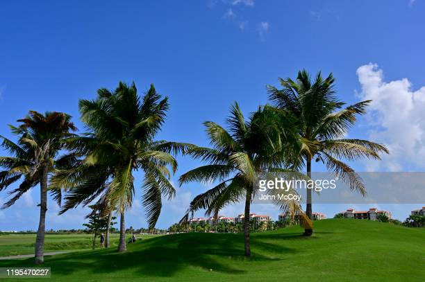 Palm trees next to the 13th tee at the Coco Beach Championship course on December 18 2019 in Rio Grande Puerto Rico