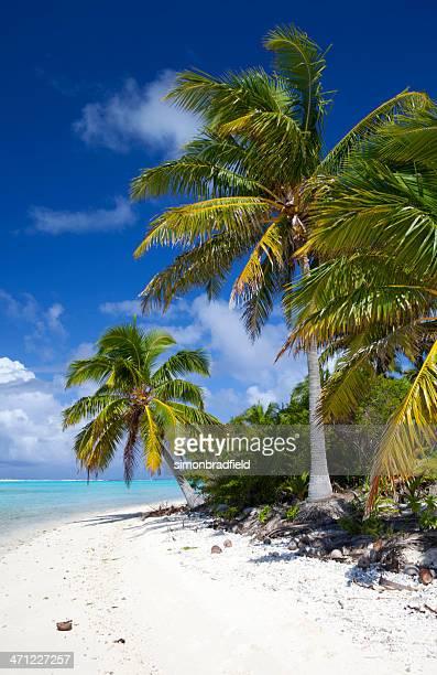 Palmen Of Paradise