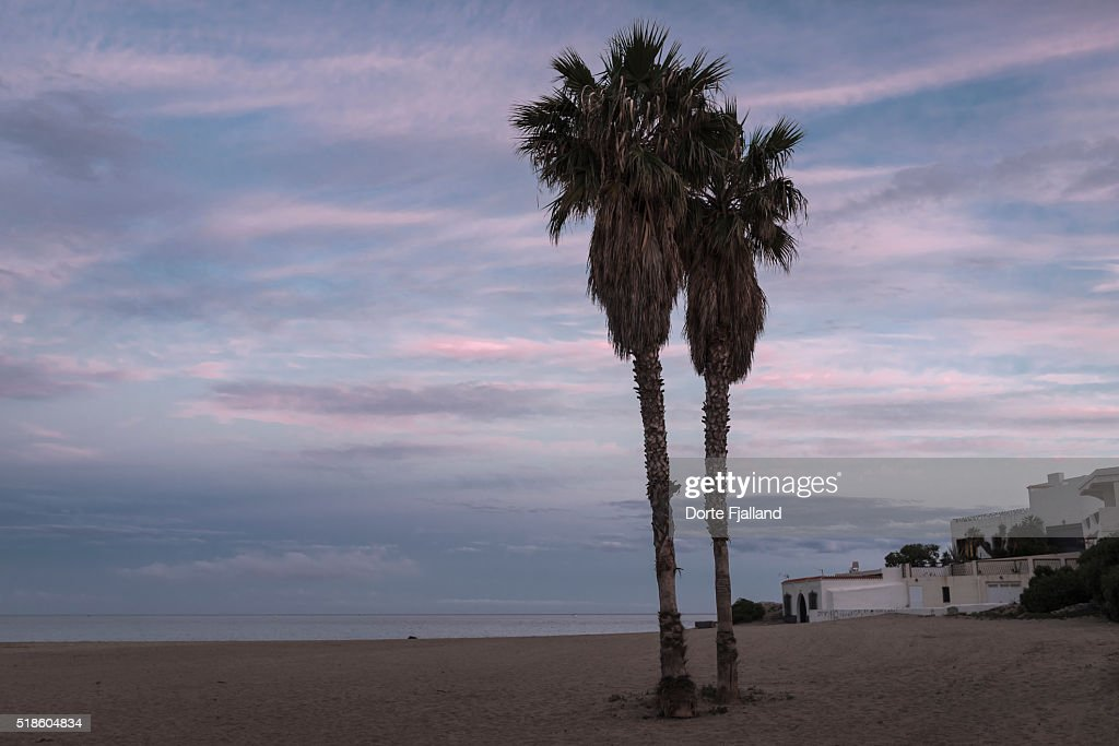 Palm trees on a beach : Stock-Foto