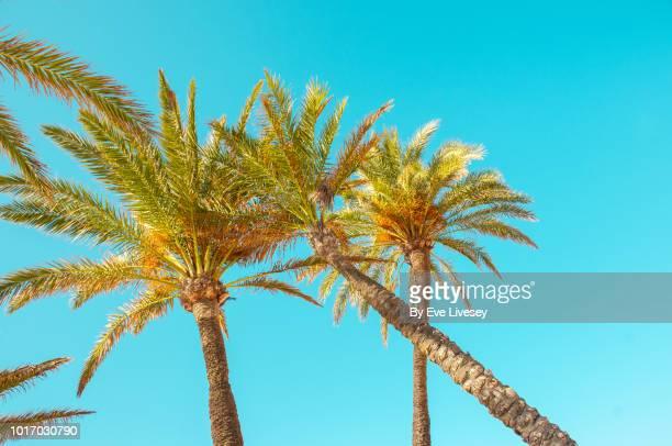 Palm Trees on a Blue Sky