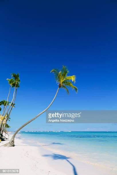 Palm trees on a tropical beach of the Caribbean sea.
