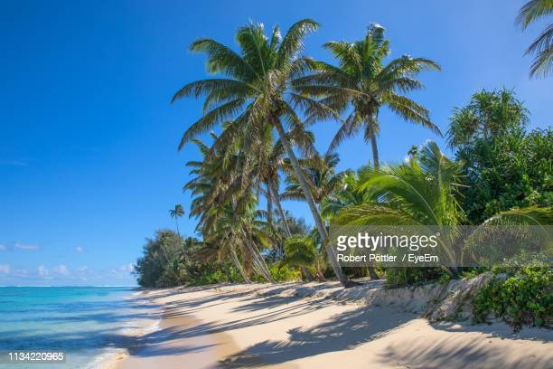 palm trees on beach against blue sky - isole cook foto e immagini stock