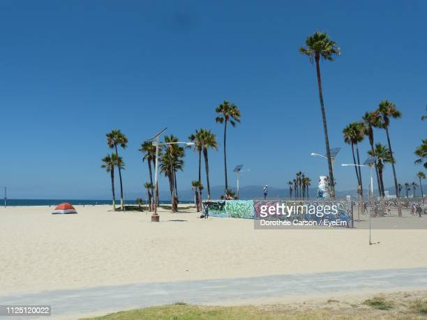 palm trees on beach against clear blue sky - venice beach stock pictures, royalty-free photos & images