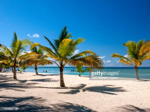 palm trees on beach against clear blue sky - dominica stock pictures, royalty-free photos & images