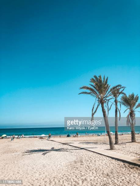 palm trees on beach against clear blue sky - alicante stock pictures, royalty-free photos & images