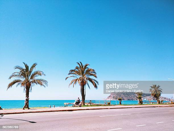 Palm tree getty images palm trees on beach against clear blue sky voltagebd Image collections