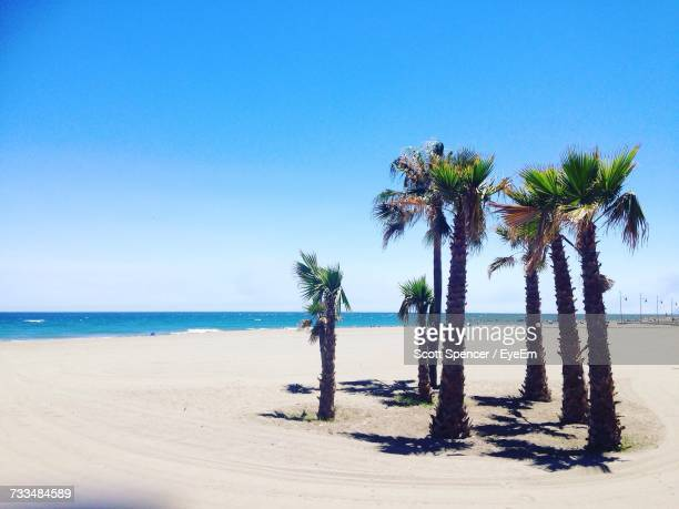 palm trees on beach against clear blue sky - malaga photos et images de collection