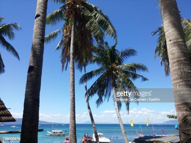 palm trees on beach against clear blue sky - brianne stock pictures, royalty-free photos & images