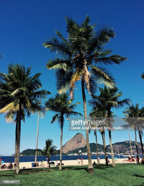 palm trees on beach against clear blue sky - filho stock pictures, royalty-free photos & images