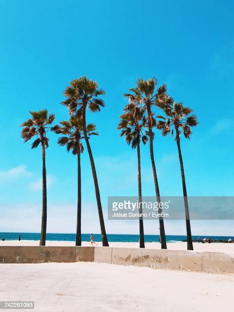 Palm Trees On Beach Against Clear Blue Sky