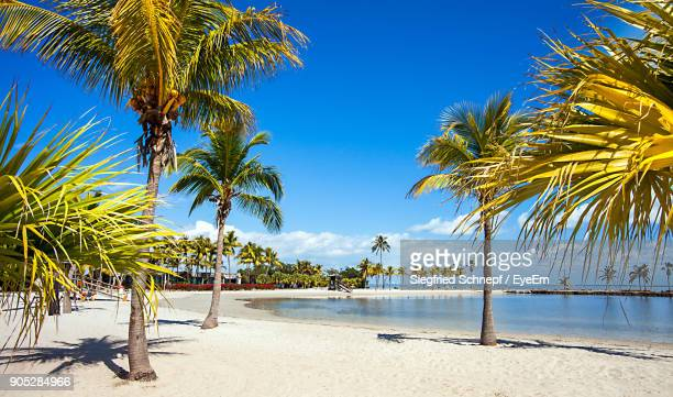 palm trees on beach against clear blue sky - miami beach stock photos and pictures