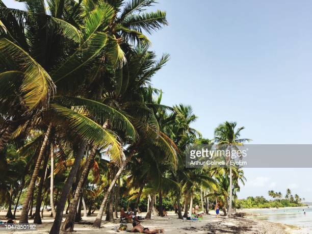 palm trees on beach against clear sky - arthur stock pictures, royalty-free photos & images