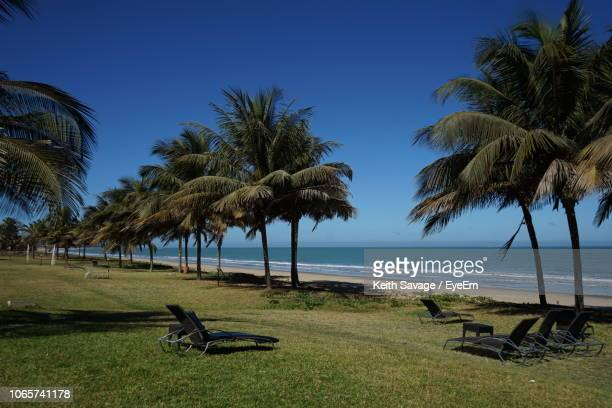 palm trees on beach against clear sky - keith savage stock-fotos und bilder