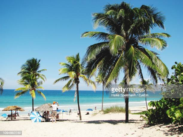 palm trees on beach against clear sky - cuba stock pictures, royalty-free photos & images