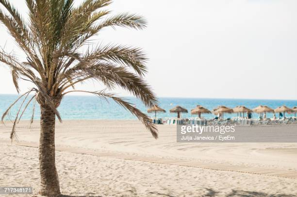 palm trees on beach against clear sky - malaga photos et images de collection