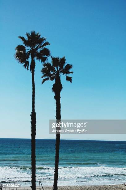 Palm Trees On Beach Against Clear Sky