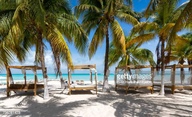 palm trees on beach against clear sky - isla mujeres ストックフォトと画像