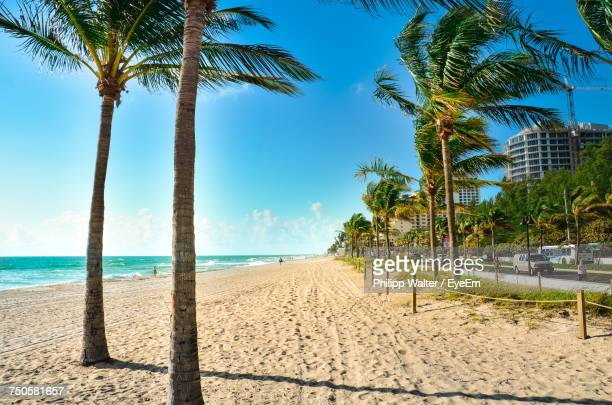 palm trees on beach against clear sky - fort lauderdale stock pictures, royalty-free photos & images