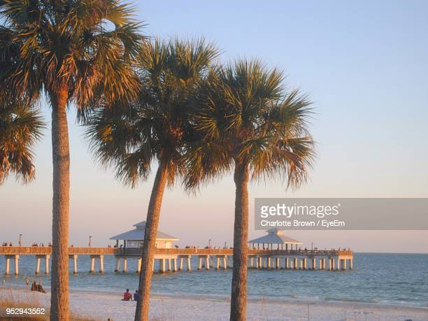 palm trees on beach against clear sky - fort myers beach stock pictures, royalty-free photos & images