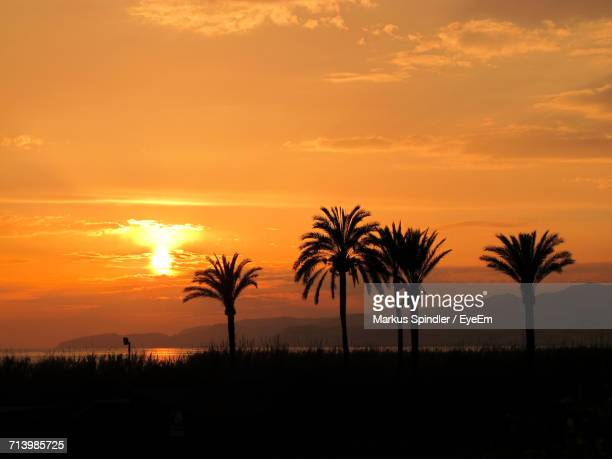Palm Trees On Beach Against Sky At Sunset
