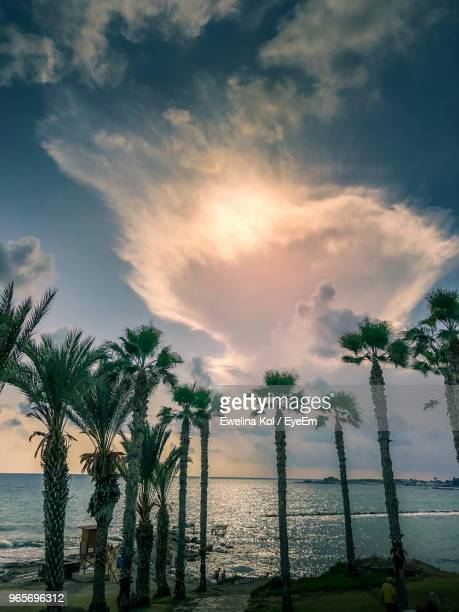 Palm Trees On Beach Against Sky During Sunset