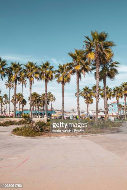 palm trees on beach against sky - cidade de los angeles imagens e fotografias de stock