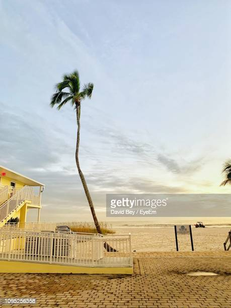 palm trees on beach against sky - lee county florida stock photos and pictures