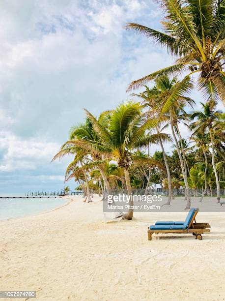 palm trees on beach against sky - florida keys stock pictures, royalty-free photos & images